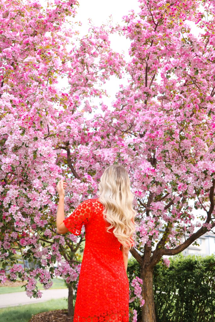 Spring blooms in Calgary, Canada. Red summer dress from Chicwish - spring photography