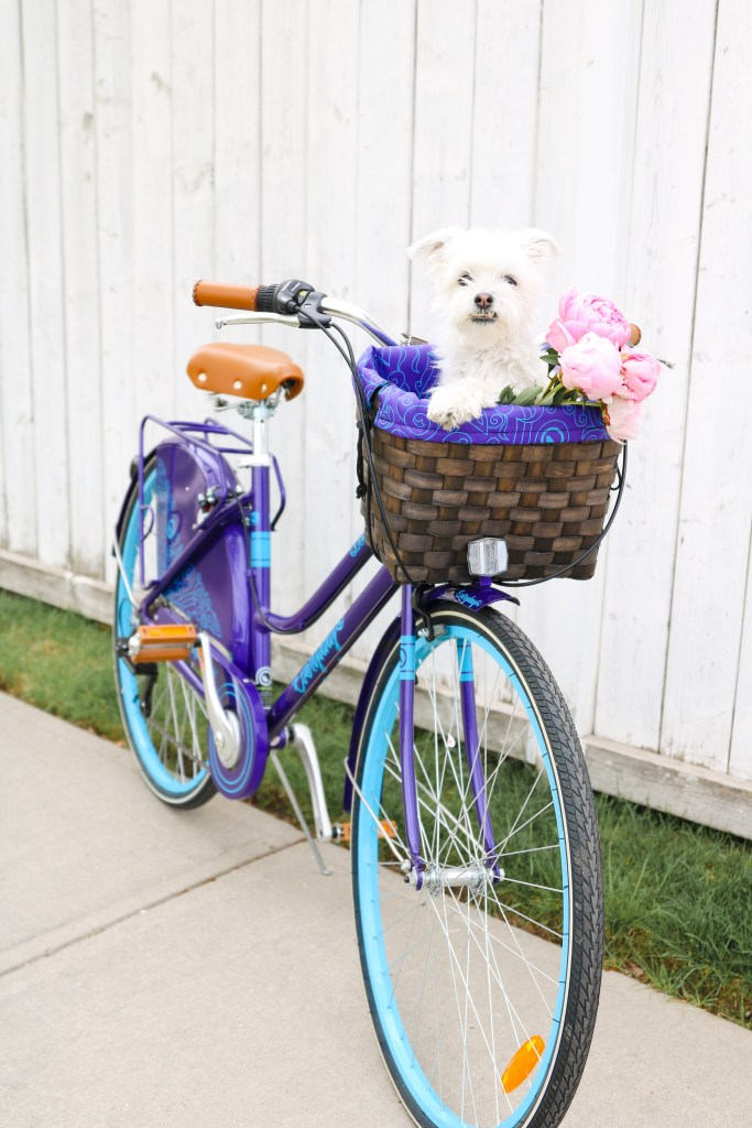 Dog in bicycle basket!