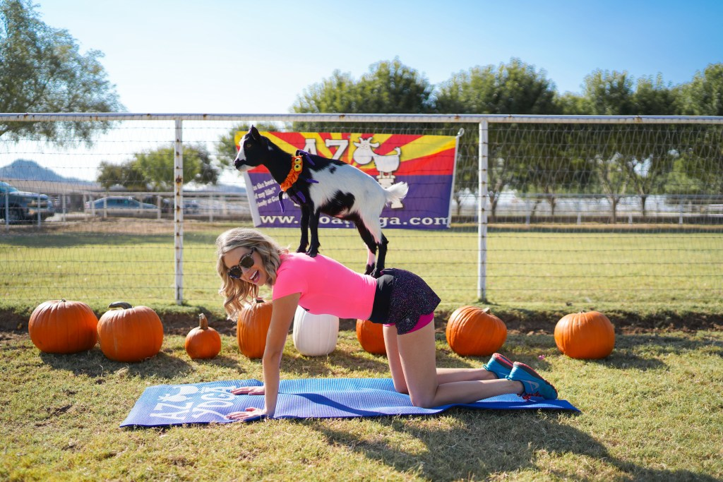 Arizona Goat Yoga review