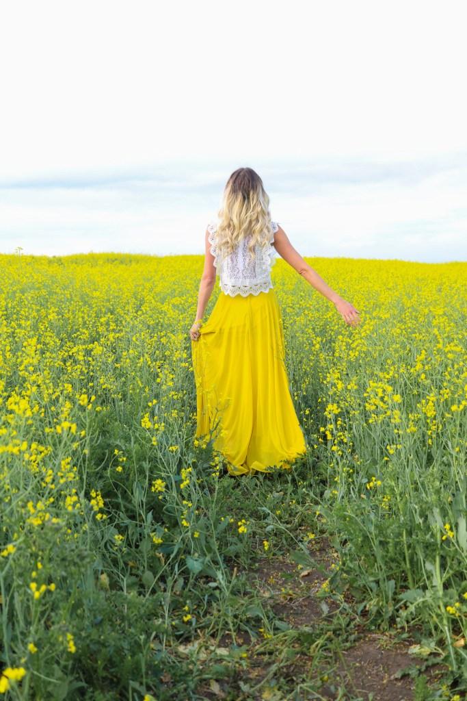 Prairie Canola Fields in Alberta