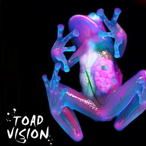 Frank Leone Saba - Toad Vision