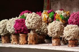 bunga edelweis bromo,bunga edelweiss bromo,bunga edelweis gunung bromo,harga bunga edelweis bromo,bunga edelweis dari bromo,jual bunga edelweis bromo,harga bunga edelweis di bromo,penjual bunga edelweis di bromo,beli bunga edelweis di bromo,bunga edelweis gunung semeru,harga bunga edelweis di bromo,sejarah bunga edelweis,fakta bunga edelweis,filosofi bunga edelweis,bunga edelweis ungu,kata kata mutiara tentang bunga edelweis,bunga edelweis gunung rinjani