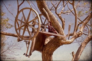 Wheelchair in tree, Photo from PEN-America