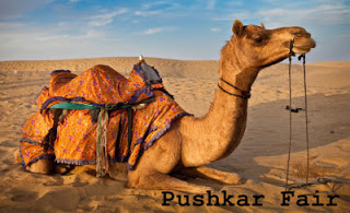 Experience the Spiritual Beauty with Camel Fair in Rajasthan