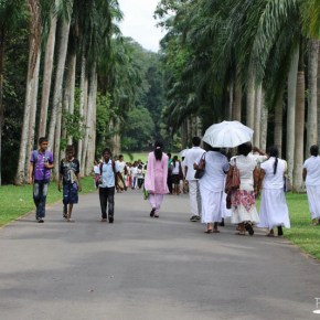 Royal Botanical Gardens - Peradeniya - Palm Avenue