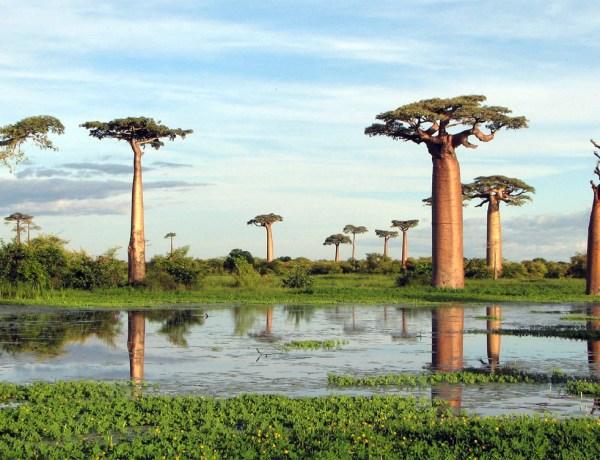 Akcija Madagaskar!! Povratne aviokarte za 421€