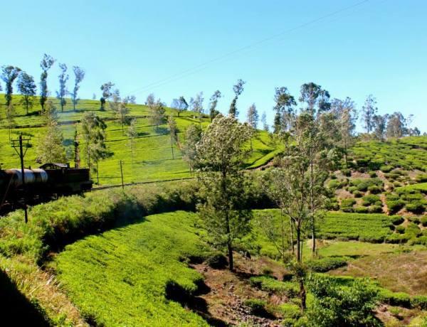 Šri Lanka – Povratne aviokarte za samo 248€