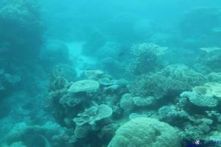 Australija - Cairns