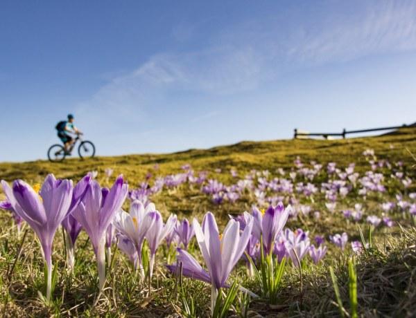 Proljeće na Velikoj planini by Domagoj Sever