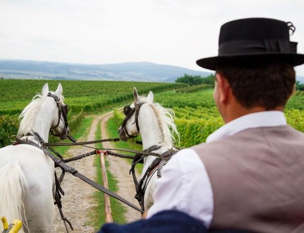 Cesta vina i ruža i ostale pleterničke priče
