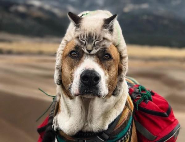 Pas i mačka putuju zajedno po svijetu
