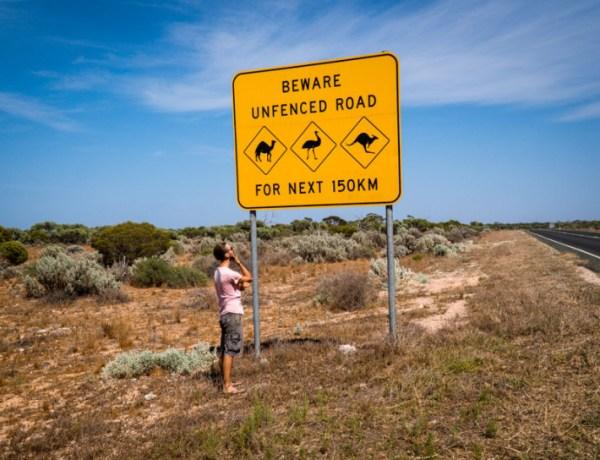 Mrtvi klokani, pustinjske vrane, i kampiranje na rubu klifa