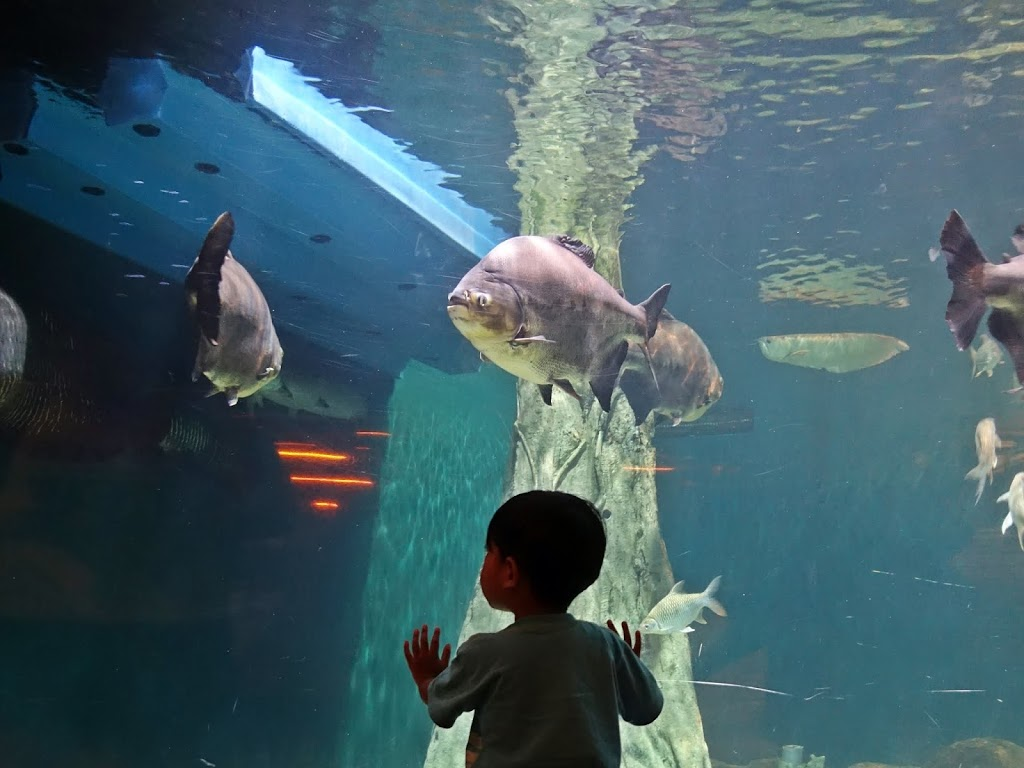 Cerianya Raka di Aquaria KLCC