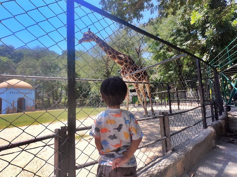 Hello Giraffe