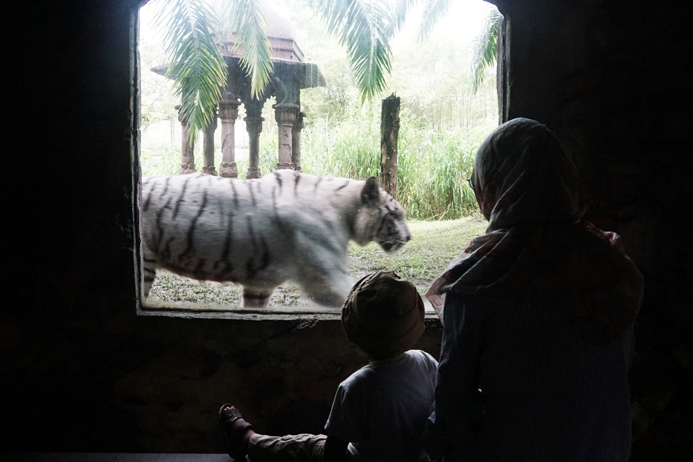 Ajak Caraka Belajar di Bali Safari & Marine Park