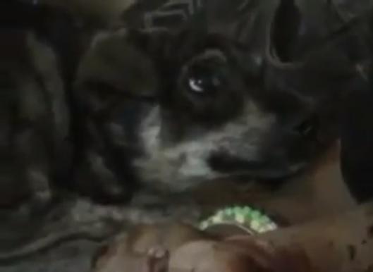 Manly Tears Cachorro - Não compre, adote!