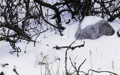 Hidden Bird In Snow Picture Riddle