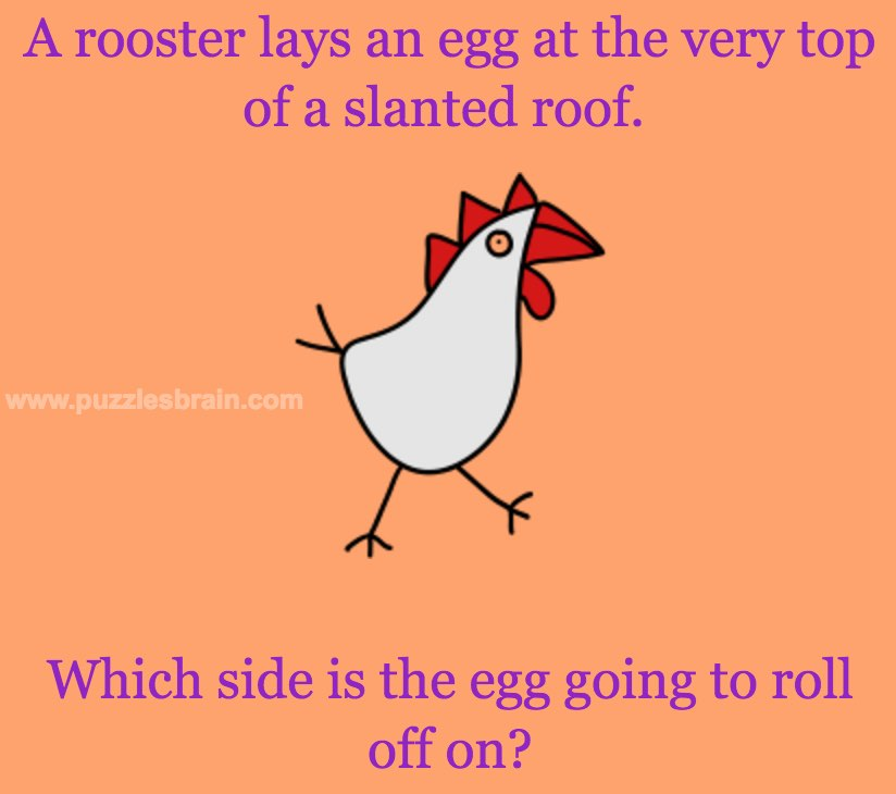 Roof A Egg On Rooster An Lays the