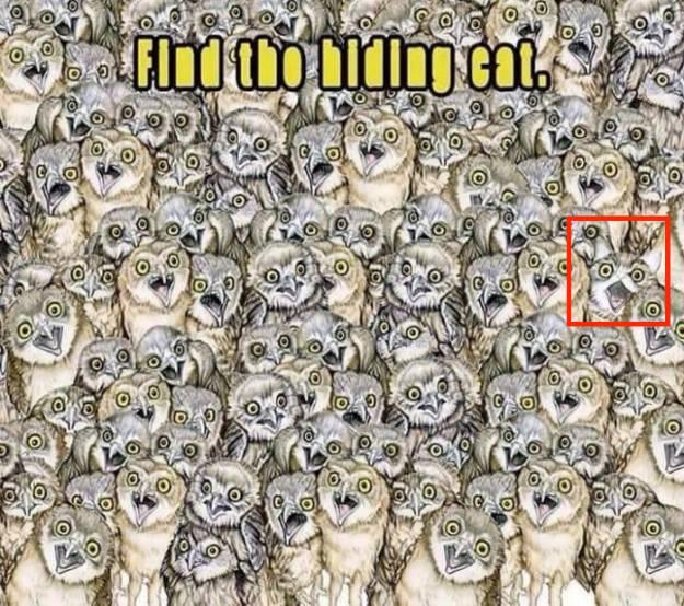 find-hidden-cat-between-owls-answer