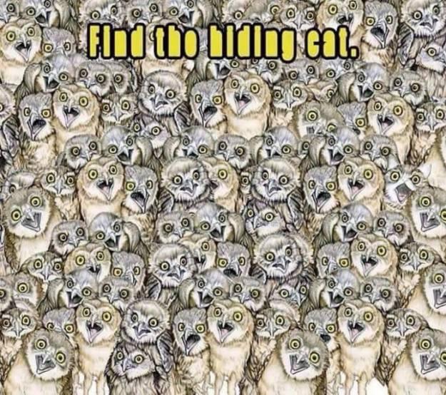 find-hidden-cat-between-owls
