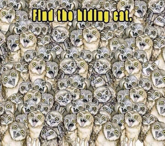 Find hidden cat - Brain Puzzles