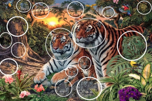how-many-tigers-in-pic-puzzle-answer