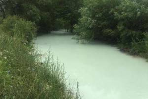 EPCG: Inženjer priznao da je kriv za pomor ribe u Pljevljima