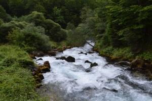 VASO KNEŽEVIĆ: Ljutica -neukrotiva snaga prirode