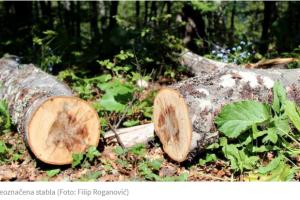 U šporetu završilo više od 800.000 kubika drveta