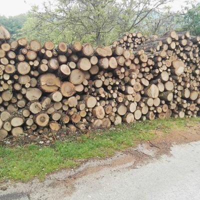 Traže doznaku stabala u maju