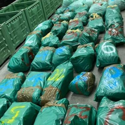 Zaplijenjeno 500 kilograma marihuane