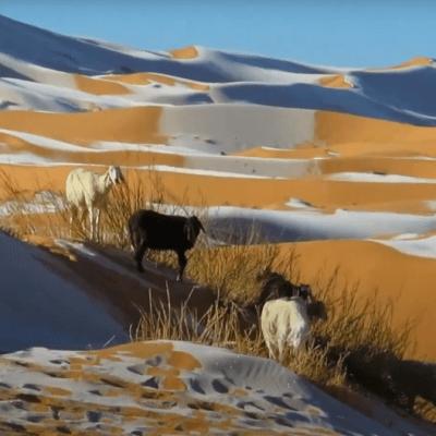 Snijeg u Sahari, temperatura ispod 0
