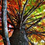 Autumn Trees Photography Contest 10997 Pictures Page 1 Pxleyes Com