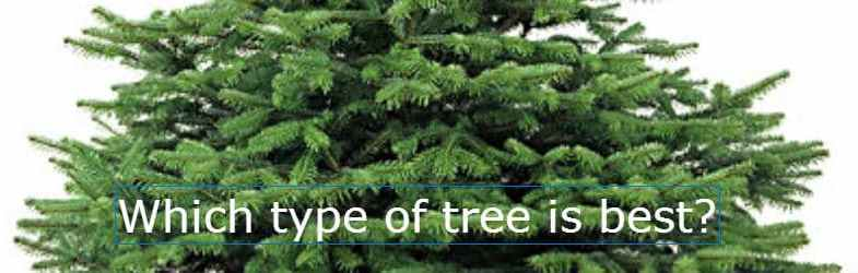 Christmas Tree Types.Which Are The Best Types Of Christmas Tree Choosing The