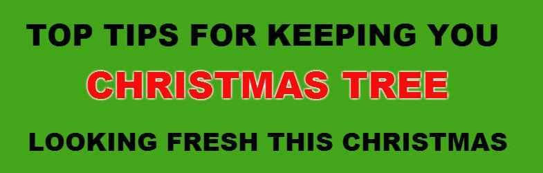 How long do real christmas trees last