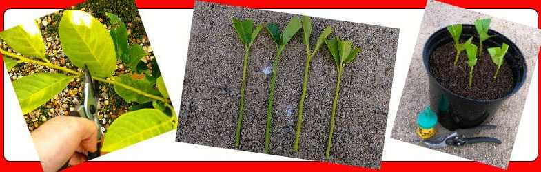 How to take cuttings – your complete guide