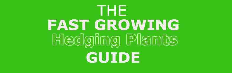 fast growing hedging plants