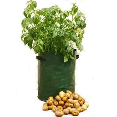 how to grow potatoes in pots