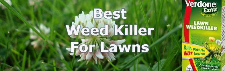 The Best Weed Killer For Lawns – For controling broad leaf weeds