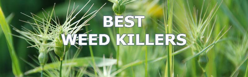 5 Best Weedkillers for 2017 - Learn which you need to get the job done