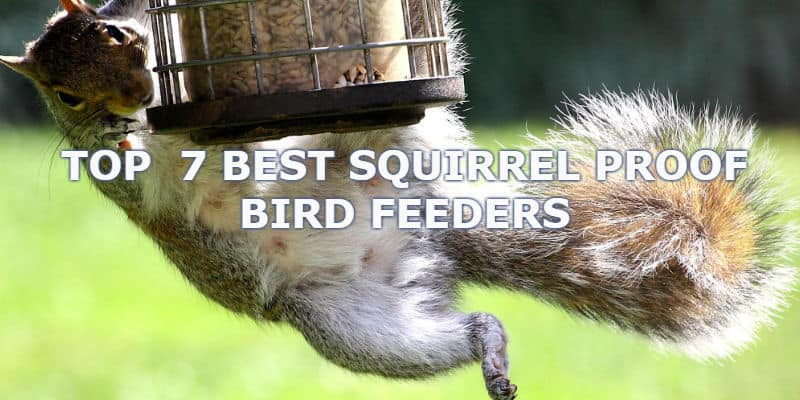 The Best Squirrel Proof Bird Feeders – Which do actually work! - 2019 Update