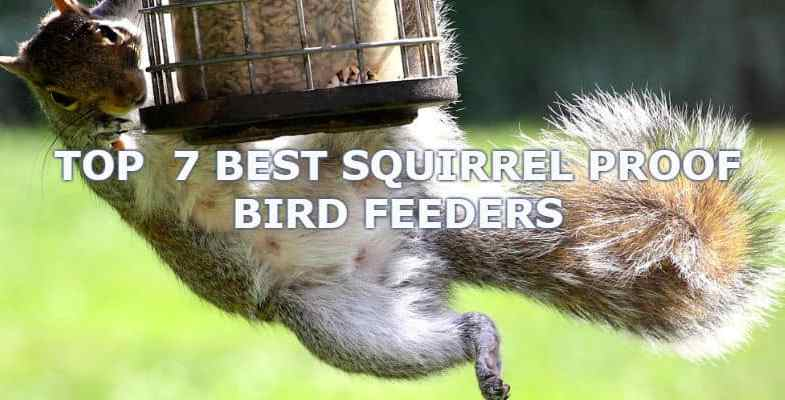 Best Squirrel Proof Bird Feeder 2017 – We compare 7 top models and see if they really are squirrel proof