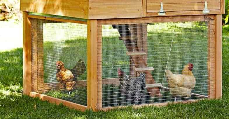 Top 6 Best Chicken Coops, Runs & Buyers Guide