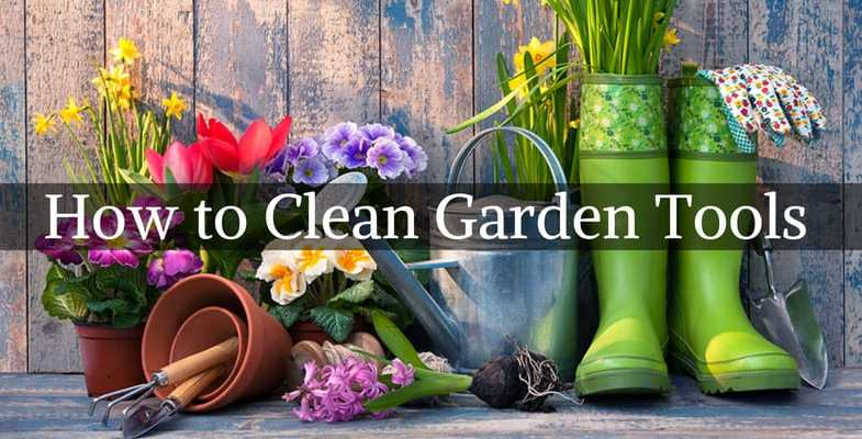 How to clean garden tools correctly – Step by step guide