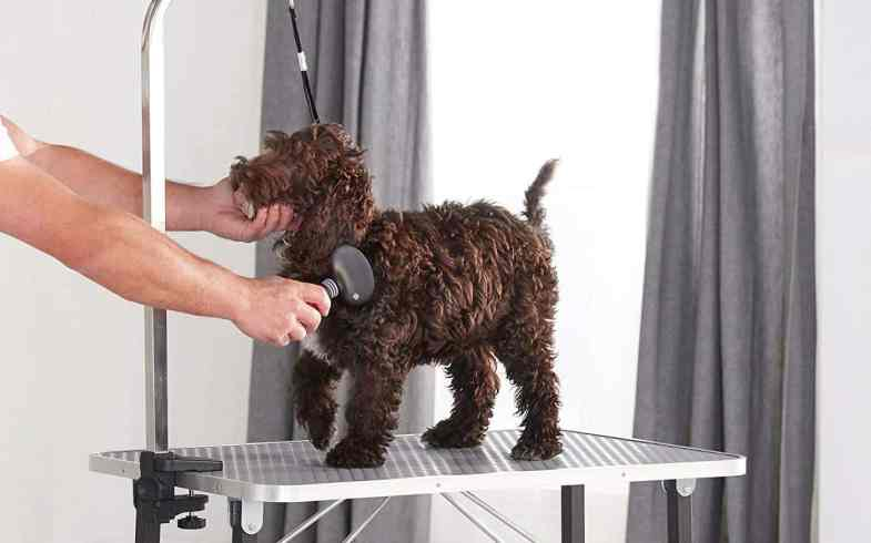 Top 5 Best Pet Grooming Table – Comparison & Reviews