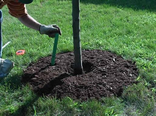 mulching-proper.jpg