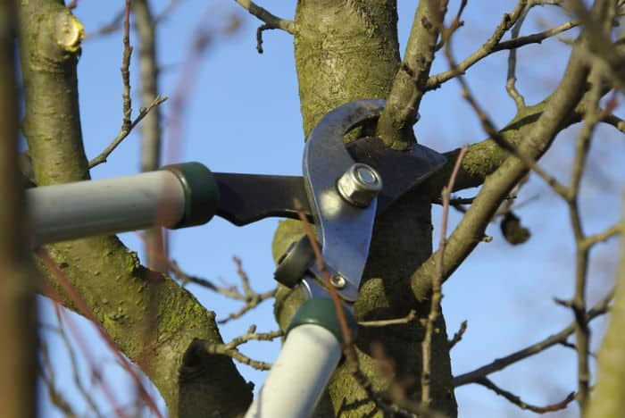 How and when to prune trees correctly