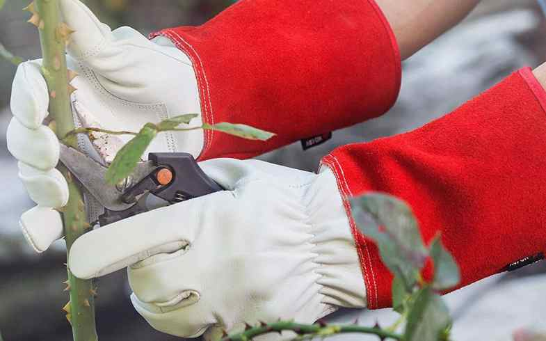 Best Gloves for Pruning Roses – 5 Top Pairs Compared