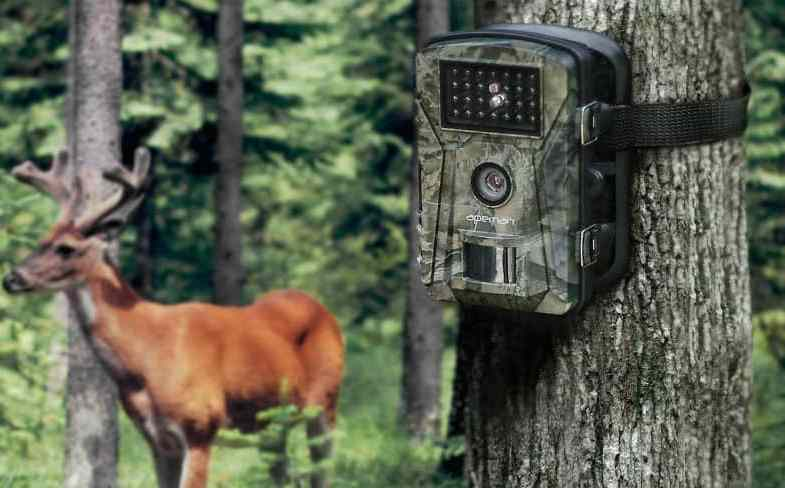 Top 5 Best Garden Wildlife Trail Cameras & Detailed reviews