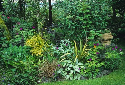 Bog garden - cottage garden
